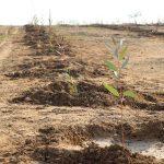 تولید سالانه ۳ میلیون تن انواع سبزی و صیفی در استان خوزستان